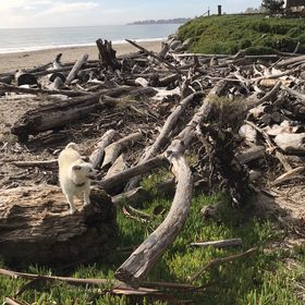 Stormy Seas Driftwood
