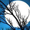 My Midnight Moon
