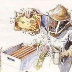 Včelár Filip