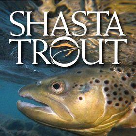 Shasta Trout