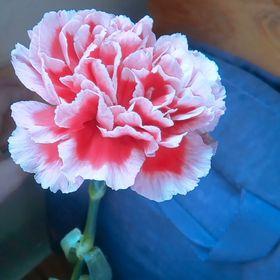 Dayanara Flores