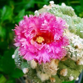 KJ's Cactus Garden