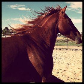horsesandanna
