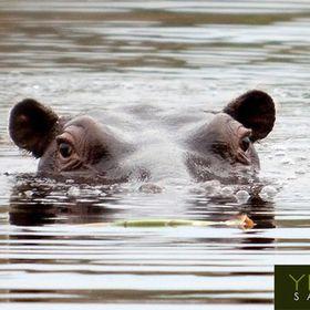 YEBO Safari