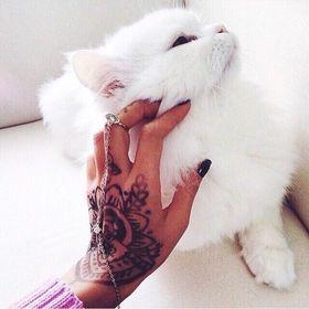 Cat 💕