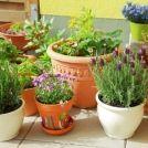 Container Gardening Asia