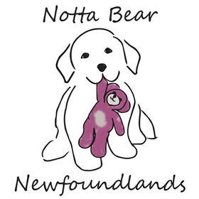 Becky Notta Bear Newfoundlands
