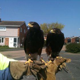 Effective Bird Control Ltd