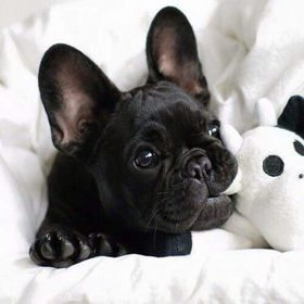 princessa and dog