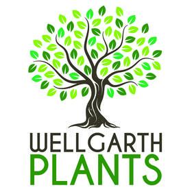 Wellgarth Daylilies & Plants