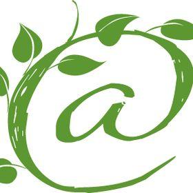 eco@jumrum ~ the ultimate Kuranda address