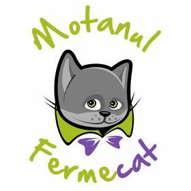 Motanul Fermecat