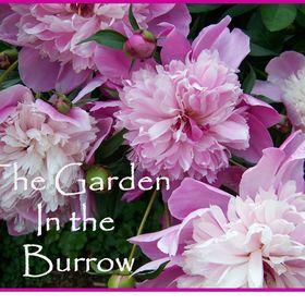 Garden in the Burrow