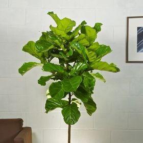 Houston Interior Plants.com