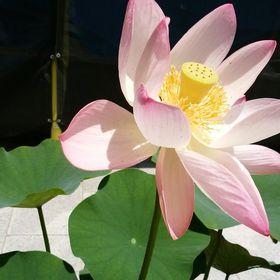 Yuki Inaba