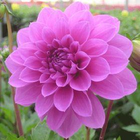 Kalamazoo Flower Group