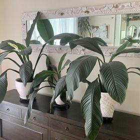 The Botanical Designer