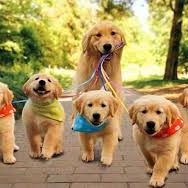 Puppies and Dog