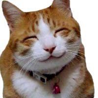 Kissakivaa