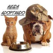 Ayuda Adoptando