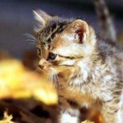 Cat Lover
