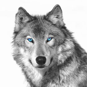 Lunaly Wolf