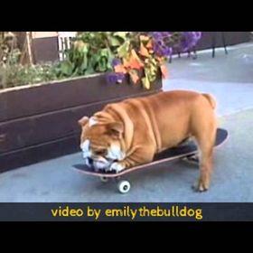 Bulldog Planet
