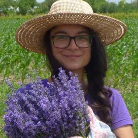 Zana Florilor Lavender Farm | Flower Love & Travels 🌼