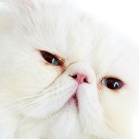 Angelina Cat
