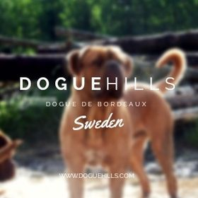 Doguehills Kennel Sweden
