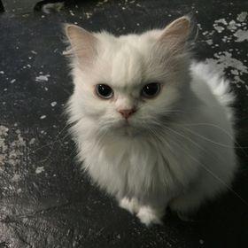 Cat Te
