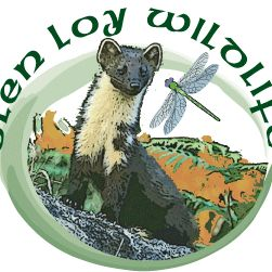 Glenloy Wildlife