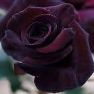 Rose Santiago