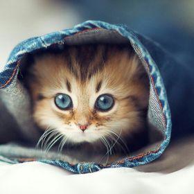 Catty Kitty