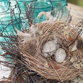 Nest Number 4