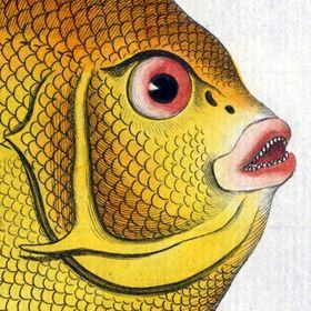 rarefishprints.com