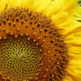 Hortus Girasole - Garten der Sonnenblume