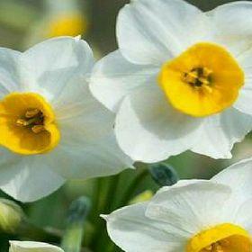 Lapadatu Narcisa
