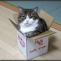 Maru In the box