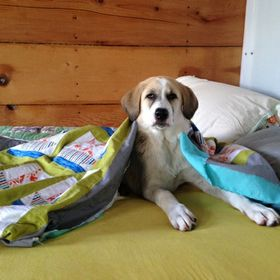 Beagle Dogs Never Lie About Love Cap Men Winter Summer Comfortbale Soft Knit Hat Cap Knit Cuff Beanie