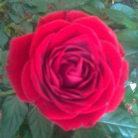 Rose Phin