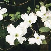 White Leaf Designs