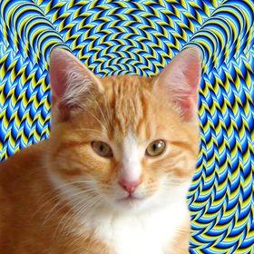 kleine strubbelige Katze XXL-Ansichtskarte