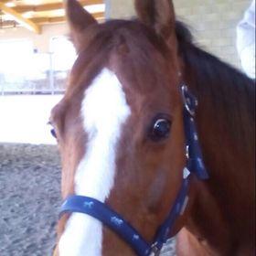 Horsessionata 🦄