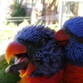 Sydney&Bert