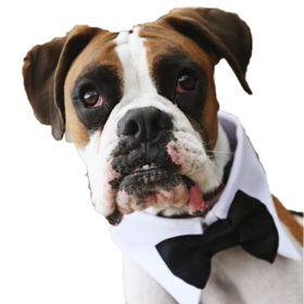900 Cool Dog Tricks Ideas In 2021 Cool Dog Tricks Dog Training Obedience Dog Hacks