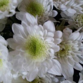 Мarina Grig (arinagrig) on Pinterest