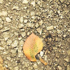 Alive Leaf