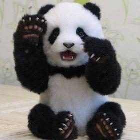 Pandaqween