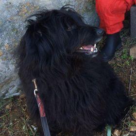 Kormi The Dog
